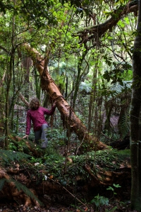 Pasivaikščiojimas po stovyklavietę drėgnajame lietaus miške